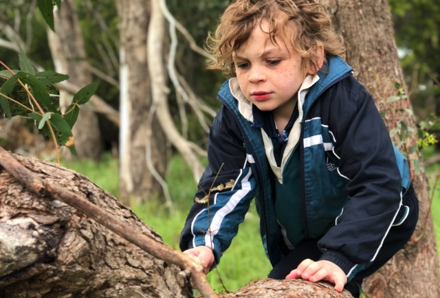 "Year 1 teacher, Mrs Samantha Millar shares the Dhumba-dha biik philosophy with 'Remember the Wild' website, who ""aims to inspire a reconnection to our environment."""