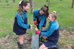 Planting trees at the College